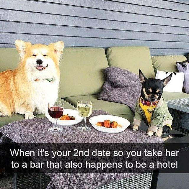 Dog - When it's your 2nd date so you take her bar that also happens to be a hotel