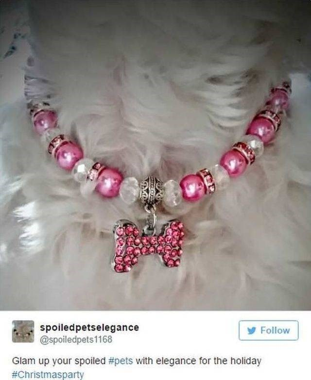 Jewellery - spoiledpetselegance @spoiledpets1168 Follow Glam up your spoiled #pets with elegance for the holiday #Christmasparty