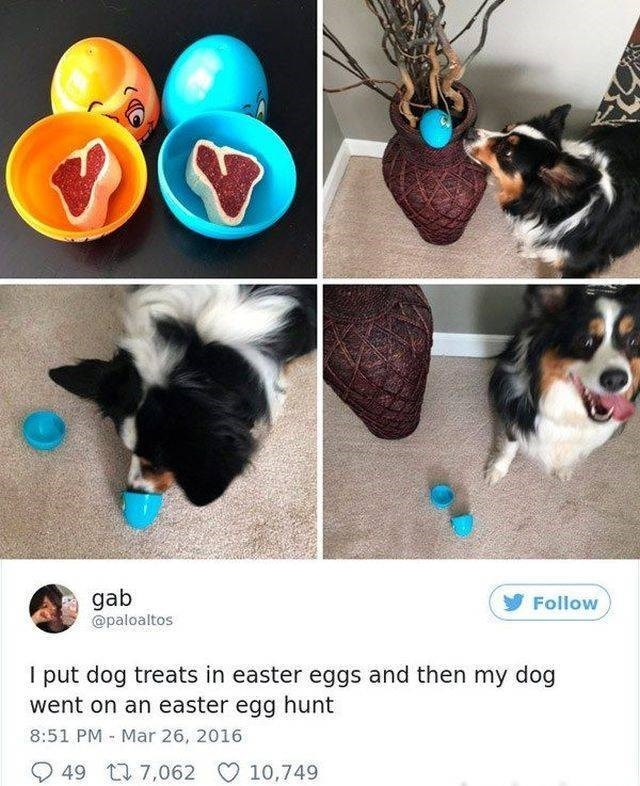 Canidae - gab @paloaltos Follow I put dog treats in easter eggs and then my dog went on an easter egg hunt 8:51 PM Mar 26, 2016 49 t7,062 10,749
