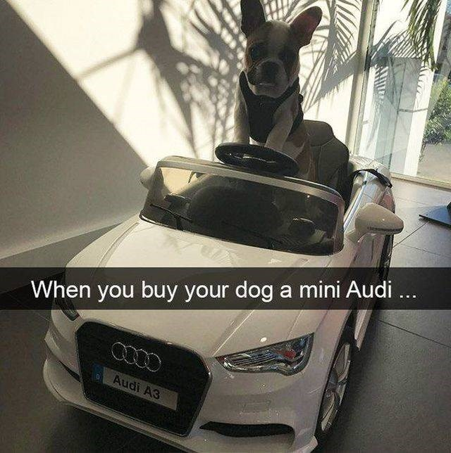 Motor vehicle - When you buy your dog a mini Audi ... Audi A3 AHI