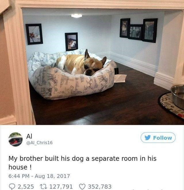 Furniture - Al @AI Chris16 Follow My brother built his dog a separate room in his house! 6:44 PM Aug 18, 2017 2,525 127,791 352,783