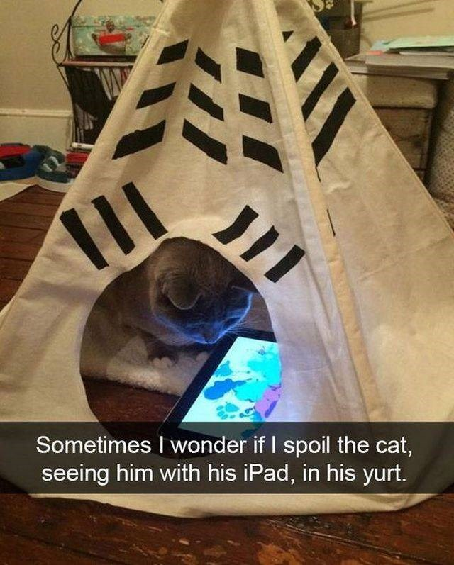 Wood - JII Sometimes I wonder if I spoil the cat, seeing him with his iPad, in his yurt.