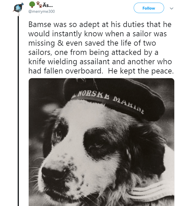 Dog - As... Follow @merryme300 Bamse was so adept at his duties that he would instantly know when a sailor was missing & even saved the life of two sailors, one from being attacked by a knife wielding assailant and another who had fallen overboard. He kept the peace. NORSKE MARINE
