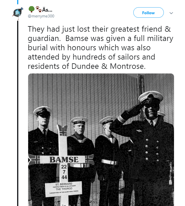 Text - Äs... Follow @merryme300 They had just lost their greatest friend & guardian. Bamse was given a full military burial with honours which was also attended by hundreds of sailors and residents of Dundee & Montrose. BAMSE 22 7 44 ST. BERNARD ATH Ee OF AL RBORDe THE THOROD g LARGES BOg oF HE ALLED