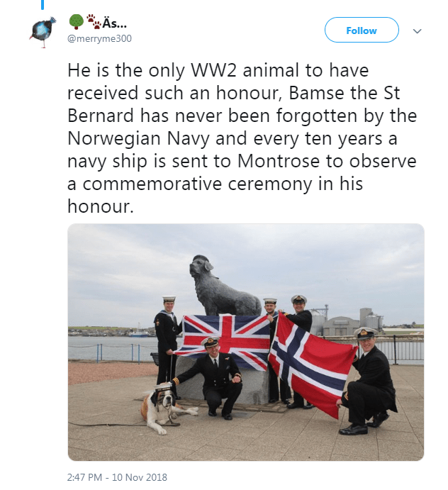 Adaptation - ÄS.. Follow @merryme300 He is the only WW2 animal to have received such an honour, Bamse the St Bernard has never been forgotten by the Norwegian Navy and every ten years a navy ship is sent to Montrose to observe a commemorative ceremony in his honour. 2:47 PM - 10 Nov 2018
