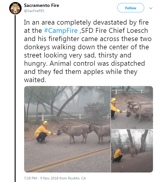 Tweet about taking care of donkeys affected by California fires