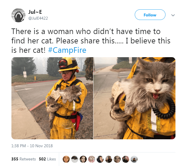 Tweet looking for owner of cat found during California fires