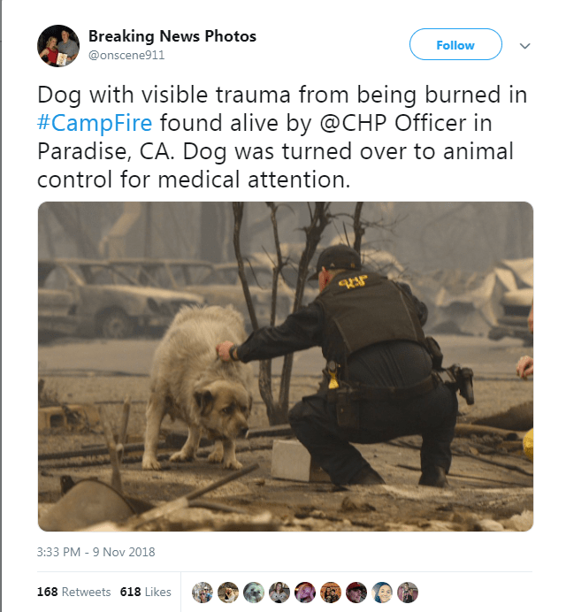 Tweet showing officer helping dog affected by California fires