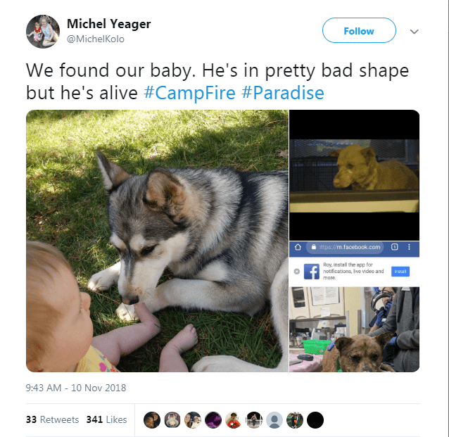 Tweet about family finding their dog that survived the California fires