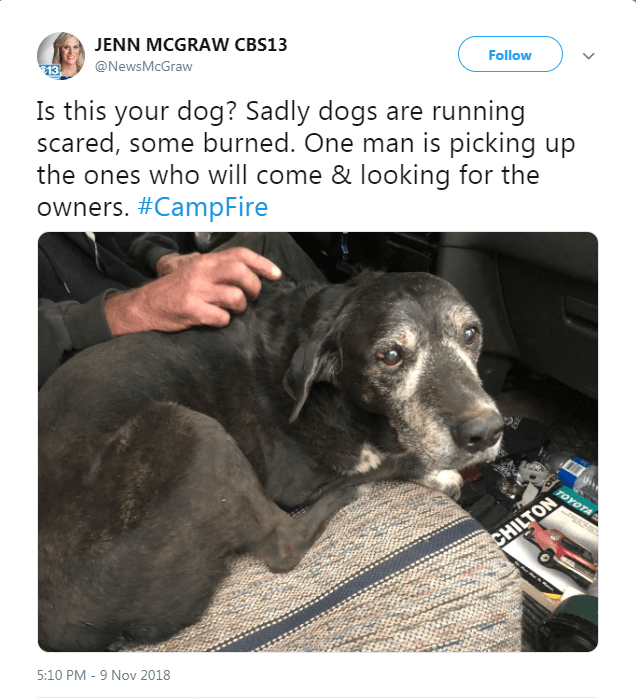 Tweet looking for owner of dog found during California fires