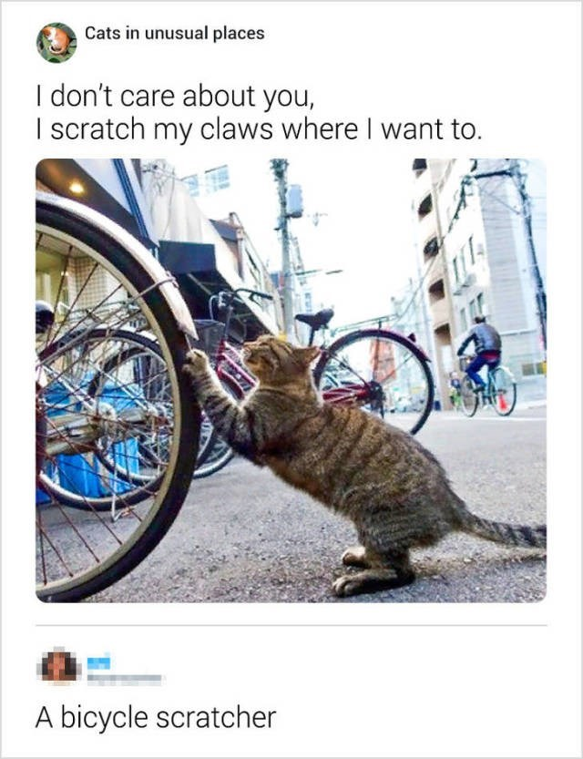 Mode of transport - Cats in unusual places I don't care about you, I scratch my claws where I want to. A bicycle scratcher