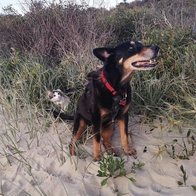 picture of dog at the beach with kitten hiding in the weeds behind it