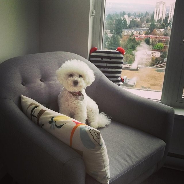picture of dog sitting on couch in front of a menacing looking pillow