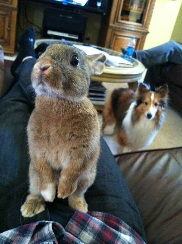picture of bunny with dog looking at it from further away in the back