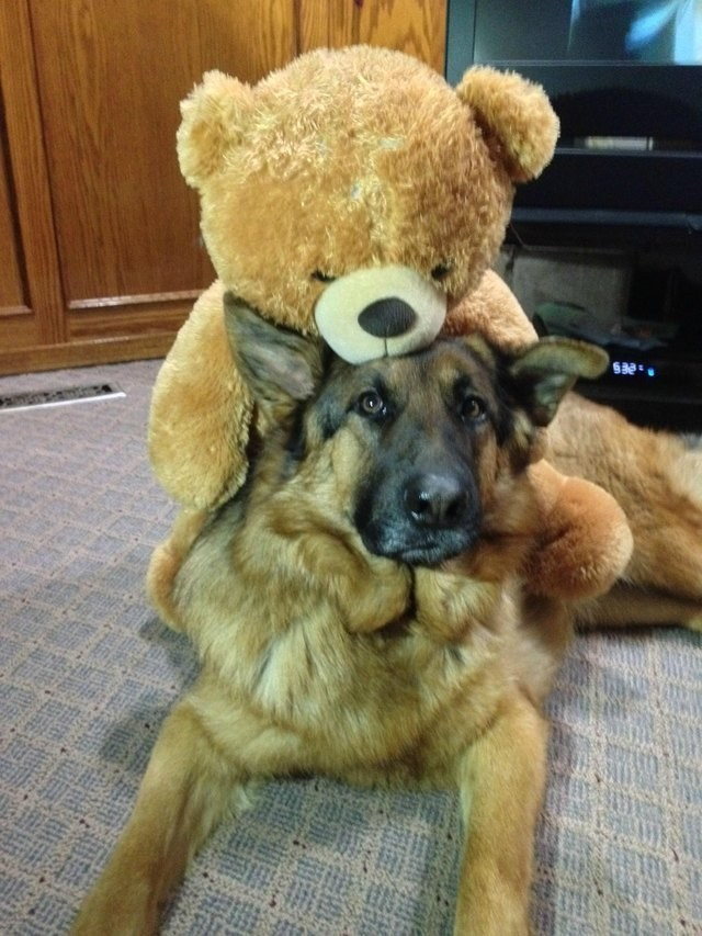 picture of dog laying on the ground looking at camera with teddy bear leaning over its head