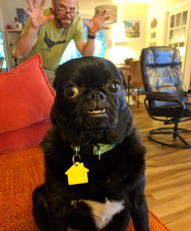 picture of dog staring at camera with man behind it looking ready to scare it