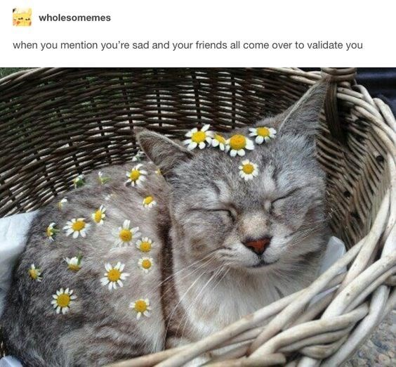 picture of cat covered in flowers as getting validation from your friends