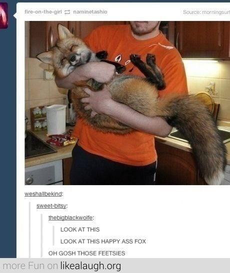 Tumblr thread commenting on picture of happy looking fox cuddled in person's arms