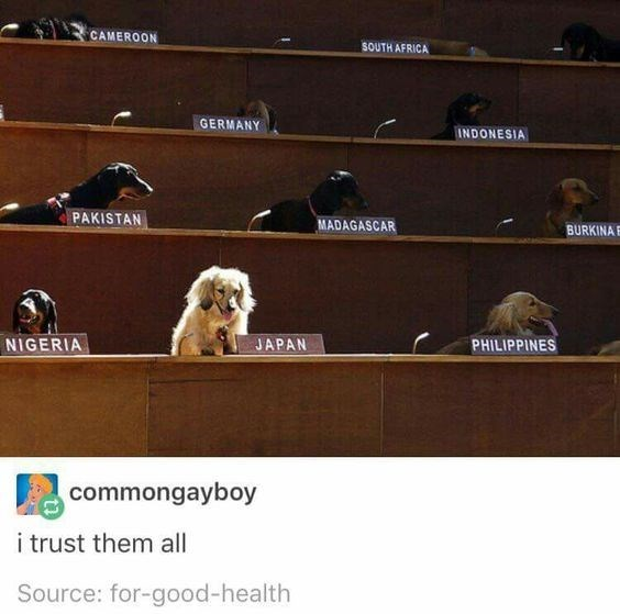 Tumblr post about trusting UN council made up of dogs