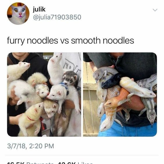 Tweet comparing ferrets and lizards to noodles
