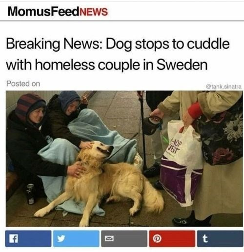 headline about dog cuddling with homeless couple