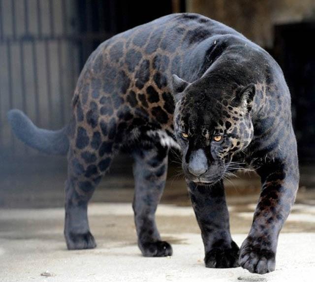 Terrestrial animal