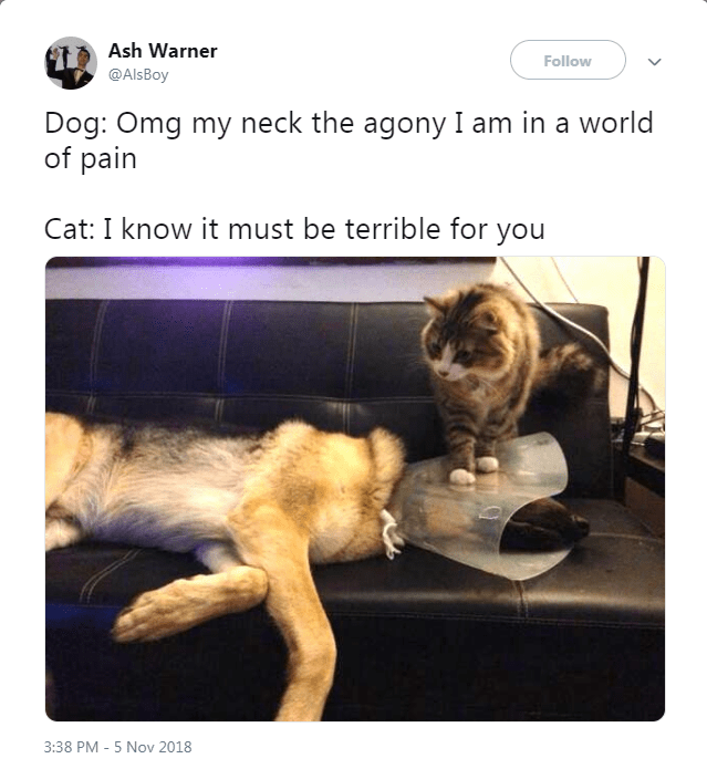 Tweet about cat abusing dog by sitting on his cone
