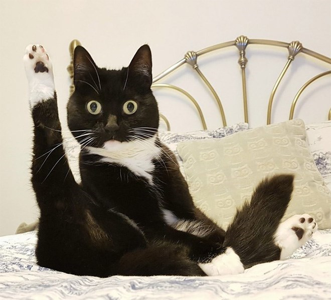 Cat - O