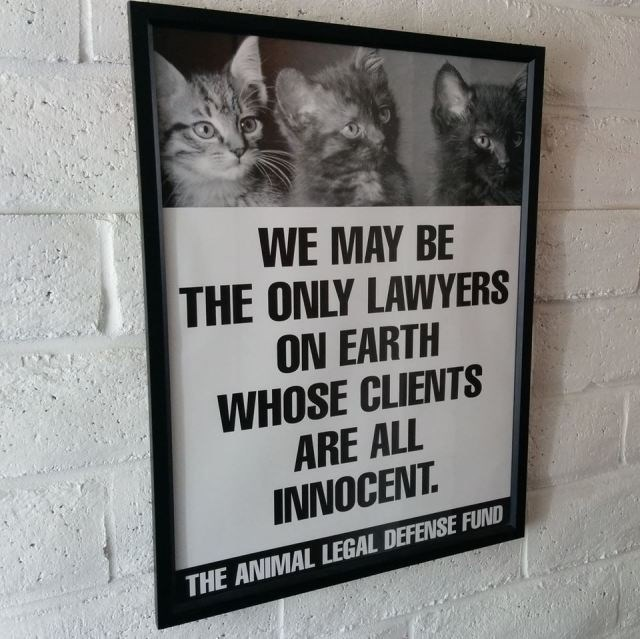 meme about cats being the only clients who are innocent for lawyers