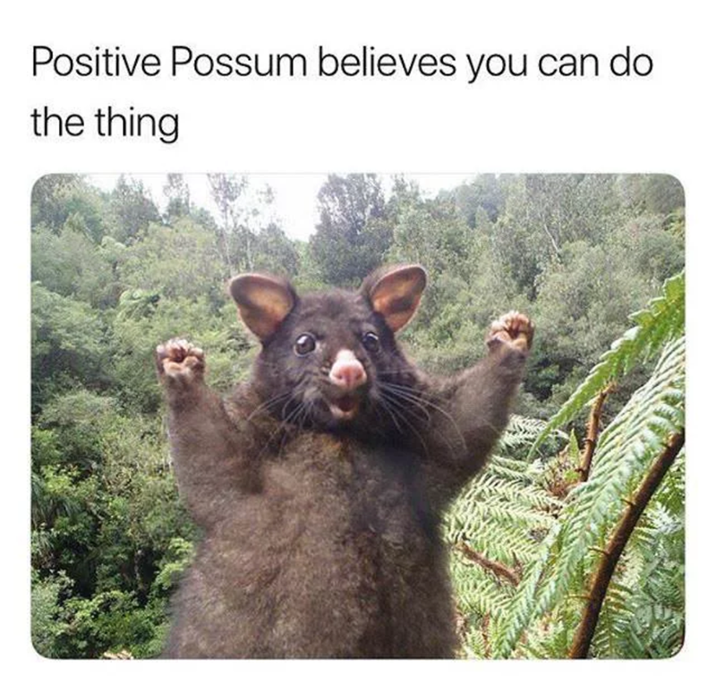 meme about getting encouragement from the positive possum