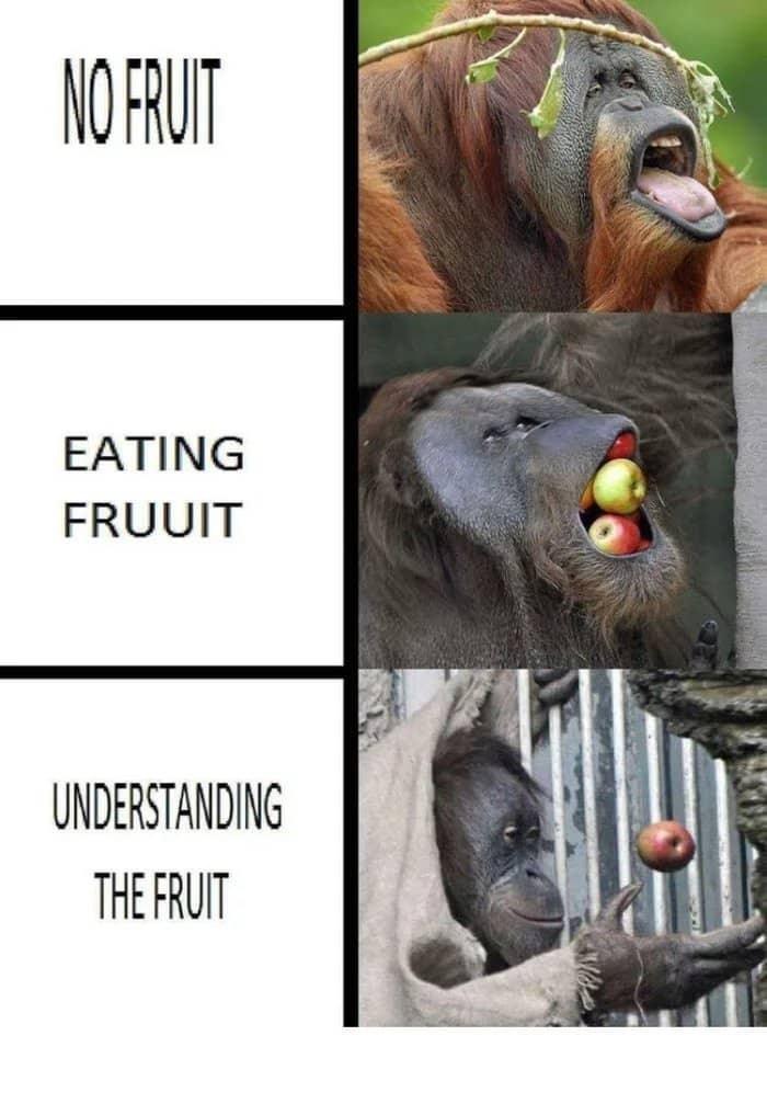 expanding brain meme with orangutan and fruit
