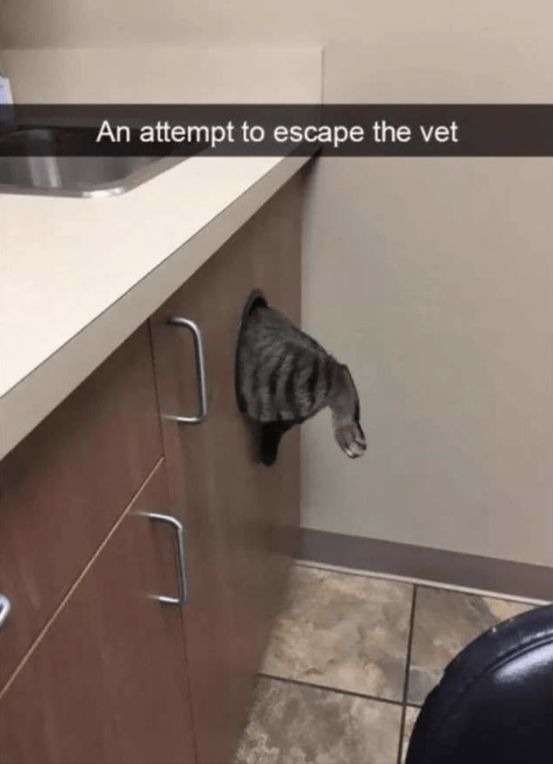 "Pic of a cat jumping into a little drawer at the vet's office; Snapchat text overlay reads, ""An attempt to escape the vet"""