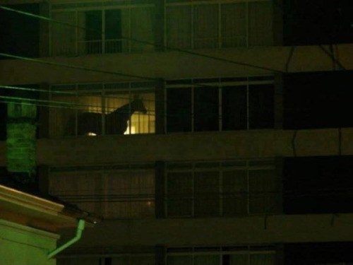 picture of lit up window showing silhouette of horse inside building