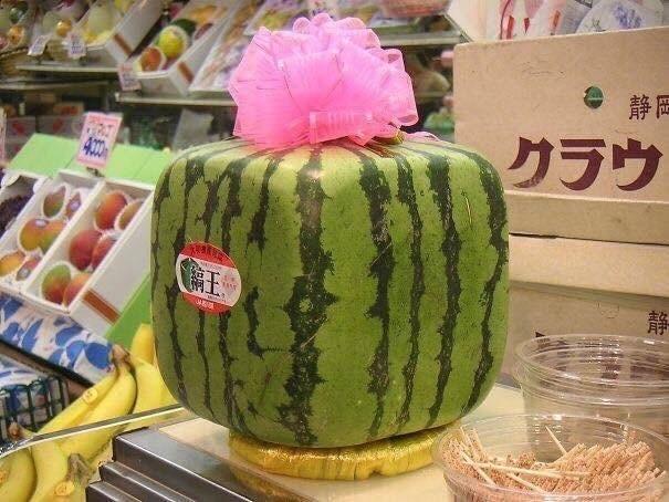 Pic of a square watermelon