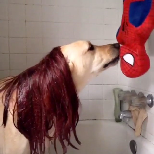 dog in redhead wig kissing an upside down Spider Man figure