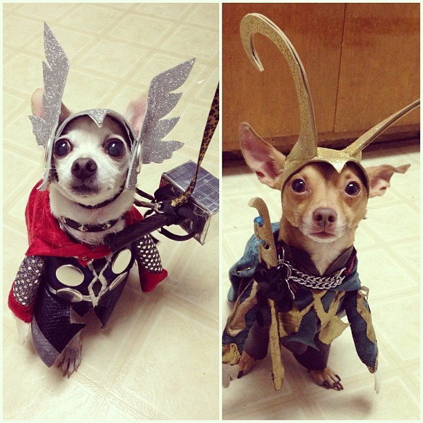 two dogs dressed as Thor and Loki with helmets and capes
