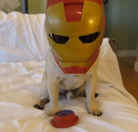 dog sitting on bed wearing Iron Man mask