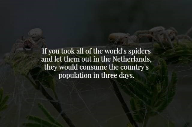 Nature - If you took all of the world's spiders and let them out in the Netherlands, they would consume the country's population in three days.