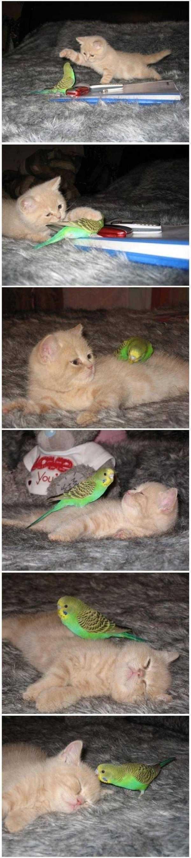 Cat - You