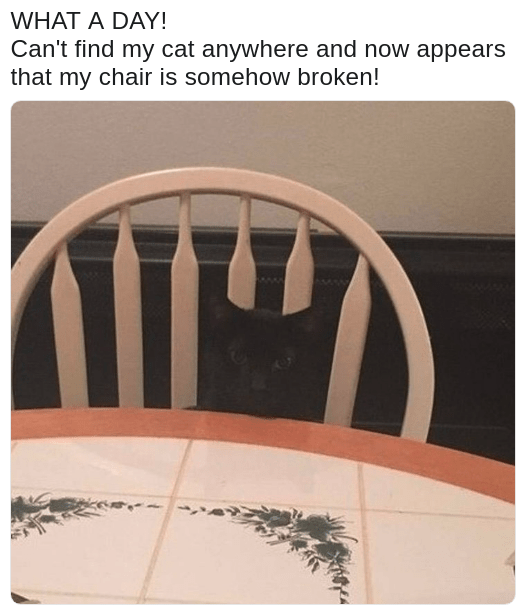 broken chair optical illusion black cat with caption joking about it