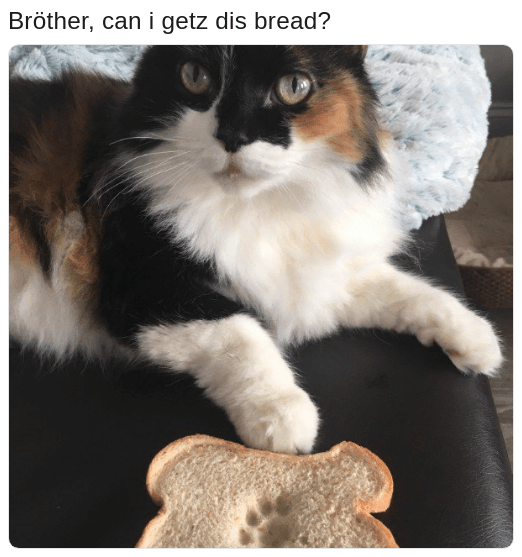 cat with paw print on bread asking brother if we can get dis bread