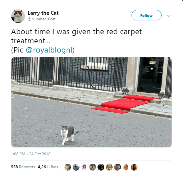 Text - Larry the Cat Follow @Number10cat About time I was given the red carpet treatment... (Pic @royalblognl) 1:08 PM 24 Oct 2018 558 Retweets 4,261 Likes