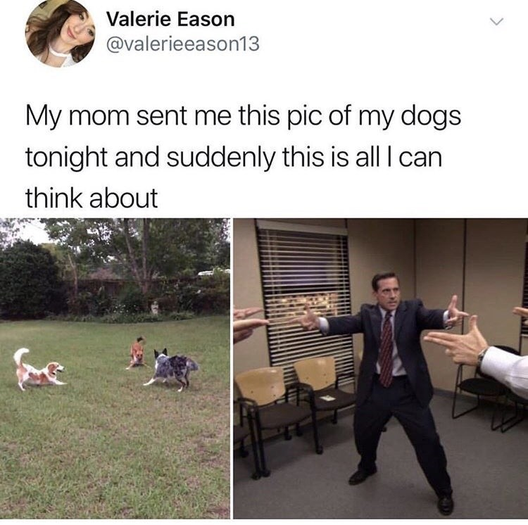 meme post about 3 dogs in a circle just like the scene from the office