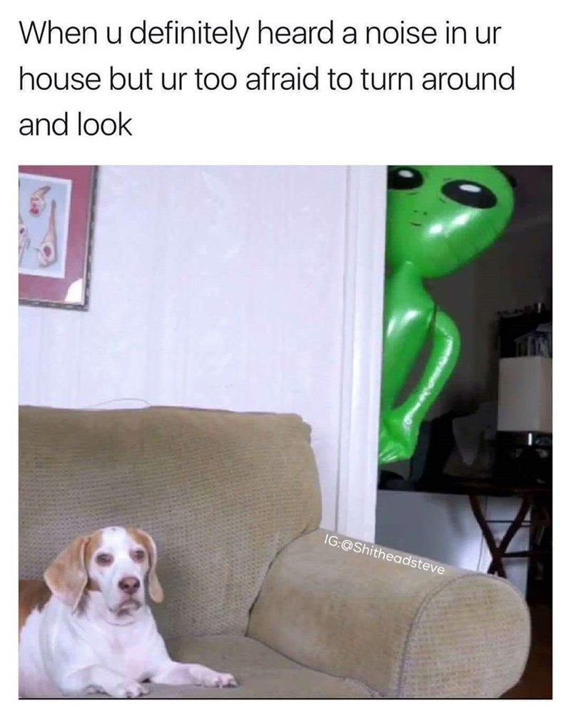 dog meme about hearing a noise in your house but being too afraid to turn around