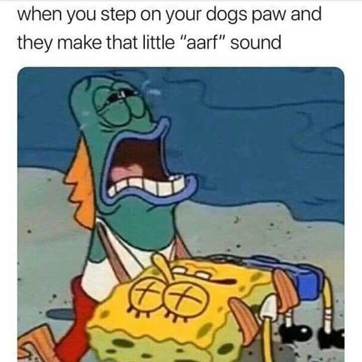 """spongebob meme about stepping on your dogs paw and they make the """"aarf sound"""""""