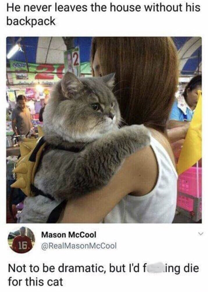 post about a cat that always wears a backpack