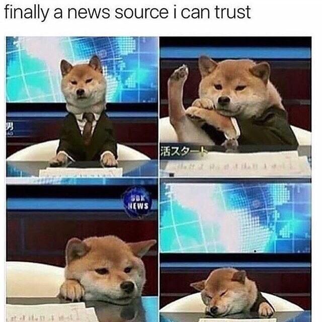 meme of a dog as a news anchor