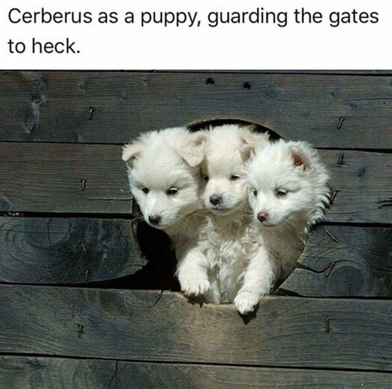 dog meme of Cerberus guarding the gates to heck
