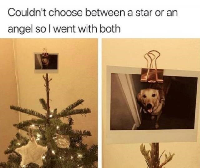 dog meme - Tree - Couldn't choose between a star or an angel so I went with both