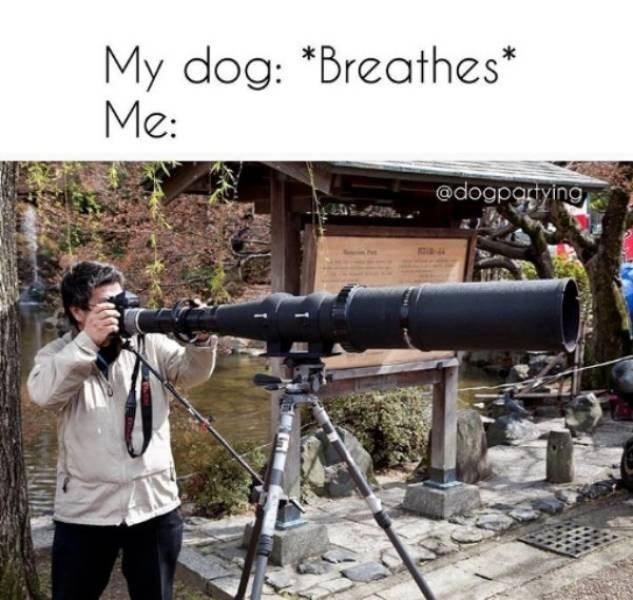 dog meme - Camera accessory - My dog: *Breathes Me: * @dogpgrying